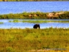 chobe_4