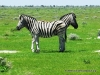 etosha_10