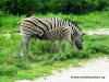 etosha_16