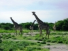 etosha_21