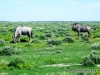 etosha_5