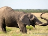 43_elefant