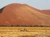 82_namib_oryx