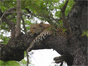 Kruger Lodge Safari