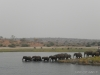 elefanten-im-fluss-elephants-across-the-river