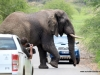 duma-sa-2012-elephant-crossing