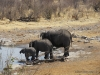 elefanten-am-wasserloch-etoscha-elephants-at-waterhole-etosha