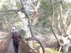 wanderung-im-fig-forest-walk-in-the-fig-forest