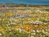 west-coast-nationalpark-blumen